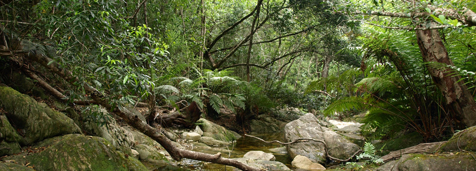 A stream running through a lush part of Knysna's indigenous forest